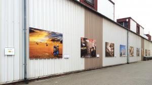 Lycos Gallery